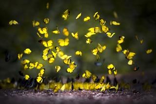 Mùa bướm MÃ ĐÀ