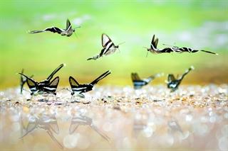 Những cánh hoa của rừng